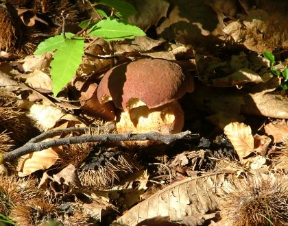 Sagra dei sapori d'autunno