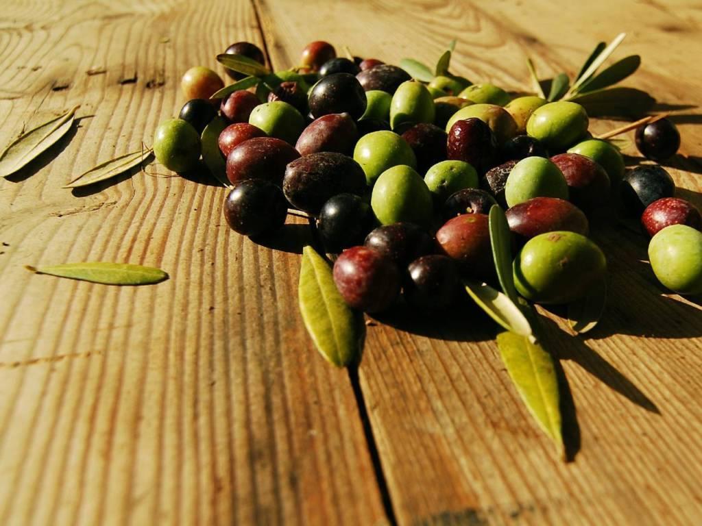 Sagra dell' ulivo e dell' olio