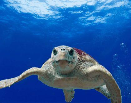 meeting fotografia subacquea
